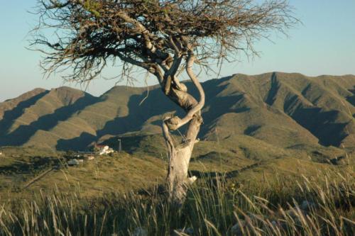 Blick auf Gästefarm mit Hakos-Gebirge